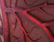 Diagnostiek en behandeling van systolisch hartfalen (0,5 StiPCO-punt)