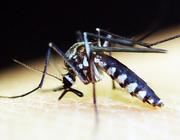 Malaria - noodbehandeling