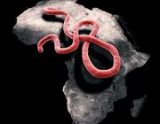 Medicamenteuze behandeling van ebolavirusinfectie