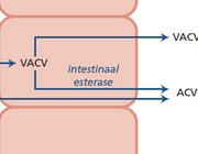 Verhoging van de biologische beschikbaarheid van antivirale middelen via inventieve farmaceutische strategieën